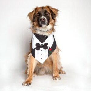 Tuxedo With Rose Wedding Dog Bandana by Dog Fashion Living