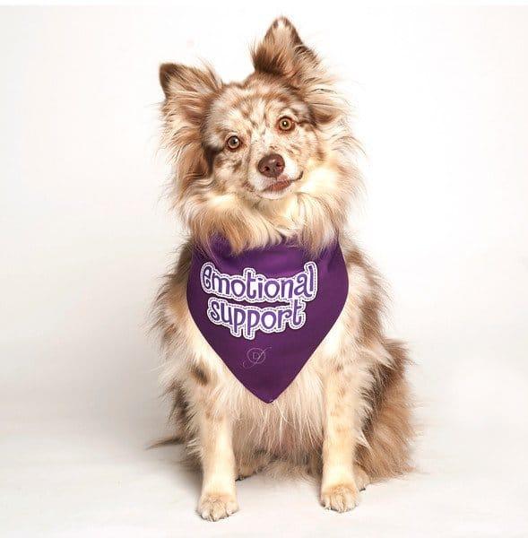 Emotional Support Dog Bandana by Dog Fashion Living