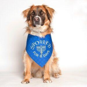 Hanukkah Holiday Dog Bandana by Dog Fashion Living