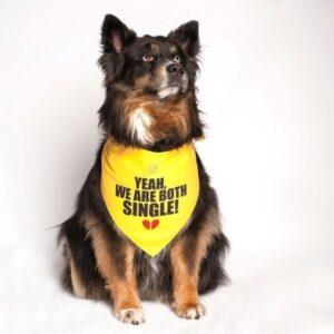 Yeah, We Are Both Single Dog Bandana by Dog Fashion Living