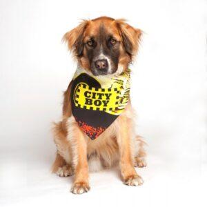 dog fashion living city boy bandana