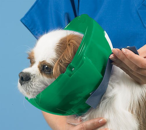 Cat and Small Dog E-Collar and Muzzle